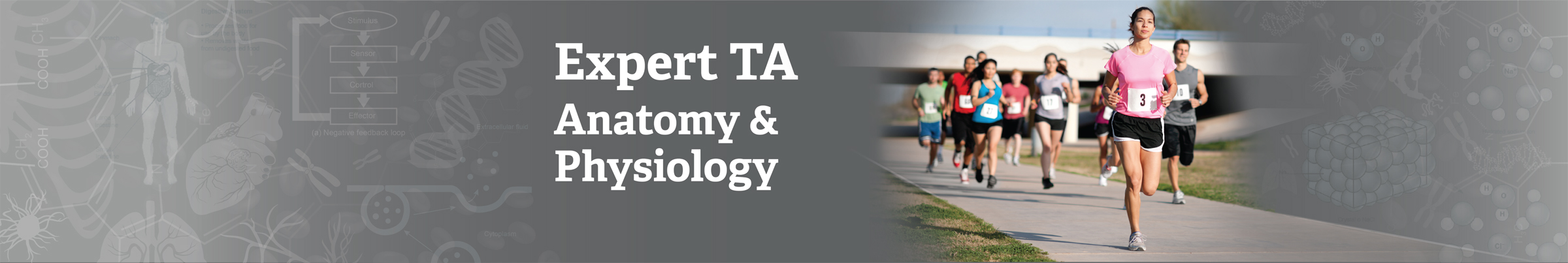 The Expert TA – anatomy-and-physiology