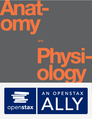 OpenStax Anatomy and Physiology Textbook